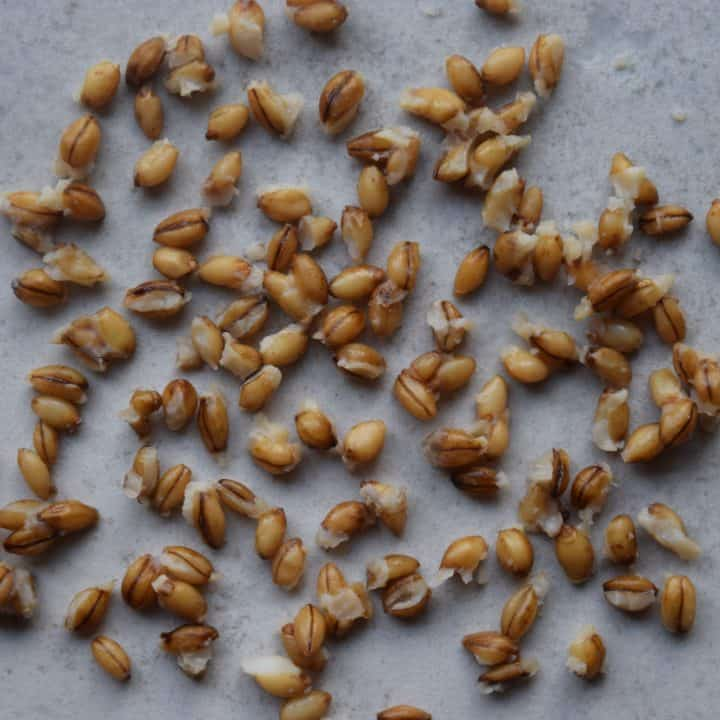 EDME - WholeSoft Sprouted Naked Barley