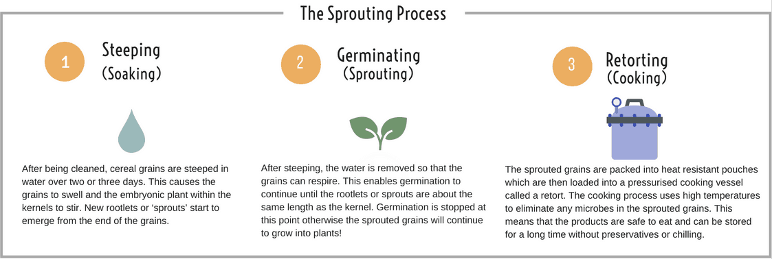 EDME - The Sprouting Process