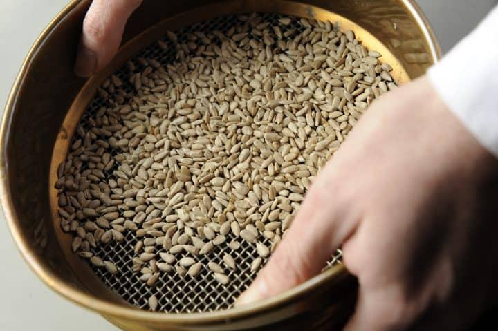 EDME - Grain