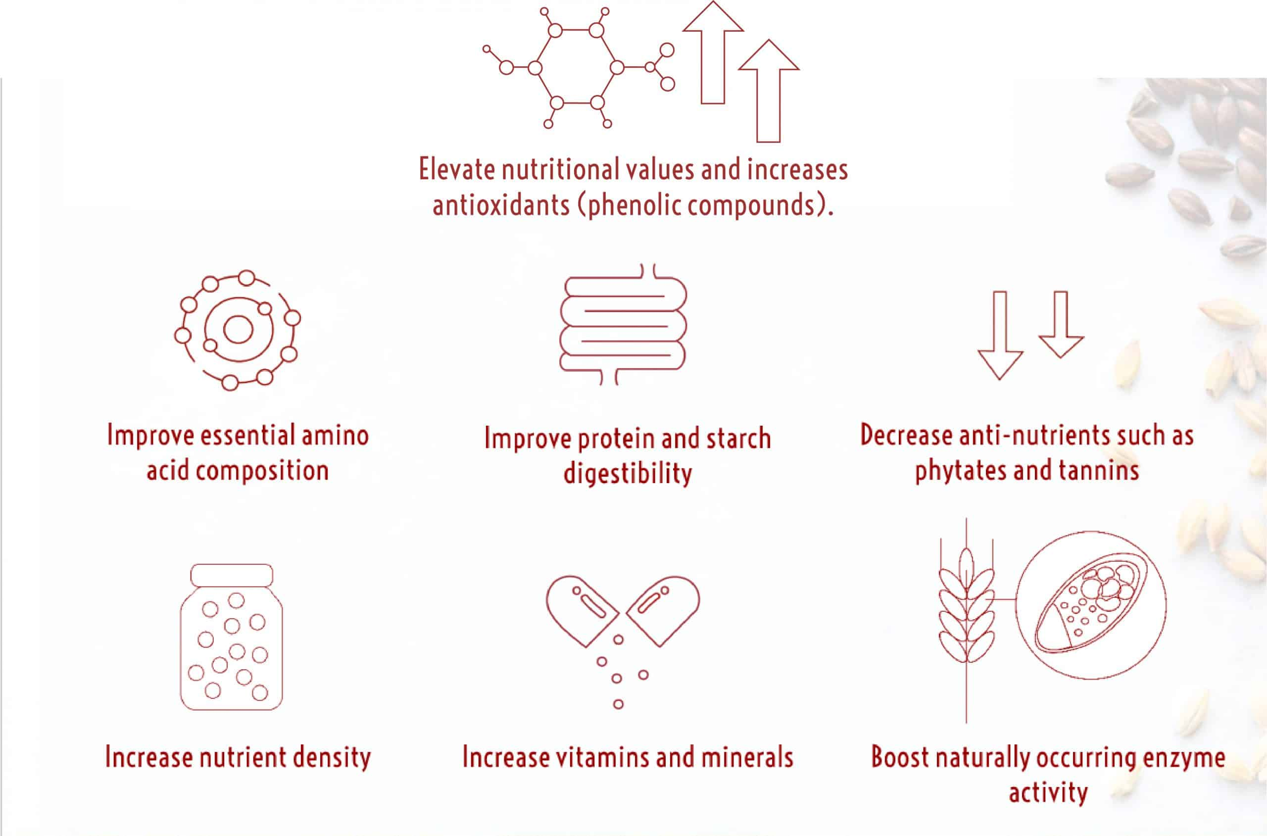 Malting process benefits (2) (002)
