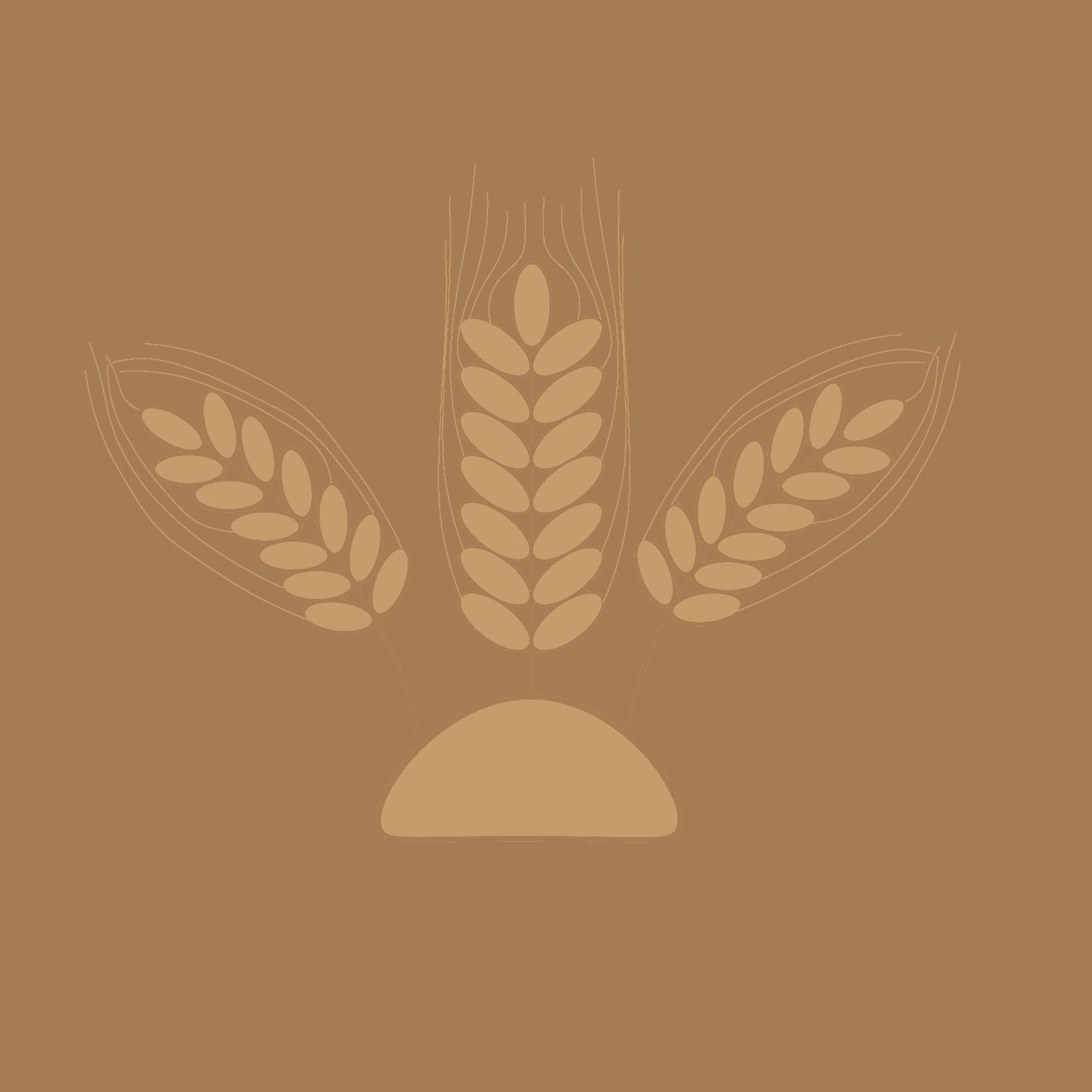 barley-13